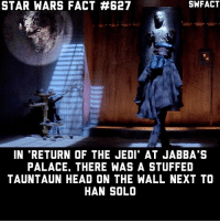 If you could have one animal from Star Wars as a pet, which would you choose? I'd choose a Dewback.: STAR WARS FACT #627  IN RETURN OF THE JEDI' AT JABBA'S  PALACE. THERE WAS A STUFFED  TAUNTAUN HEAD ON THE WALL NEXT TO  HAN SOLO If you could have one animal from Star Wars as a pet, which would you choose? I'd choose a Dewback.
