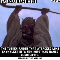 "Children, Luke Skywalker, and Memes: STAR WARS FACT #949  SWFACT  THE TUSKEN RAIDER THAT ATTACKED LUKE  SKYWALKER IN ""A NEW HOPE WAS NAMED  URORRUR R R.  SPECIES OF THE WEEK I want to name one of my children this 😂👌 Source: Absolutely Everything You Need to Know About Star Wars."