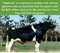 """https://t.co/Zixhm2RDDg: """"Starbuck"""" is a famous Canadian bull, whose  genome was so desirable that his sperm sold  for $25 million during his life and he has more  than 200,000 daughters https://t.co/Zixhm2RDDg"""