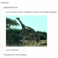 Funny, Life, and Love: stardusttx  grapewallofchina  your life hasn't been completed until you see giraffes fighting  you're welcome  ithought they were partying If you love to laugh you'll love @funny 😂