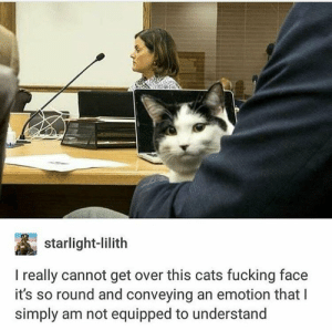 cat: starlight-lilith  I really cannot get over this cats fucking face  it's so round and conveying an emotion that I  simply am not equipped to understand cat