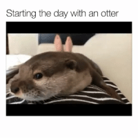 Funny, Goals, and Otter: Starting the day with an otter Morning goals