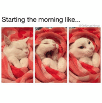 Memes, 🤖, and Derivative: Starting the morning like..  DrSmashove (@dopegrounds) Some cats are so adorable that you forget that they're complete assholes who derive pleasure from your pain 🤗 ClawMe BiteMe GazeAtMeJudgmentally DestroyMyHome MyBodyIsReady 😍😂😂😂