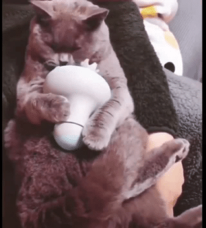 starvxng-soul: thenatsdorf: Cat uses meowssager. This innocent cat is to help detox your dashboard. Have a nice day! : starvxng-soul: thenatsdorf: Cat uses meowssager. This innocent cat is to help detox your dashboard. Have a nice day!