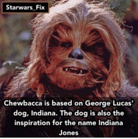 Fact from my second account @starwars_fix - chewbacca starwars hansolo: Starwars Fix  Chewbacca is based on George Lucas  dog, Indiana. The dog is also the  inspiration for the name Indiana  Jones Fact from my second account @starwars_fix - chewbacca starwars hansolo