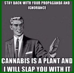 Cannabis: STAY BACK WITH YOUR PROPAGANDA AND  IGNORANCE  CANNABIS IS A PLANT AND  I WILL SLAP YOU WITH IT