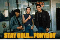 25 Best Ponyboy Memes Be Excited Memes Know What Memes Curtis Memes The tonight show starring jimmy fallon. meme
