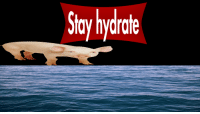 Stay and Hydrate: Stay hydrate <p>Hydrate</p>