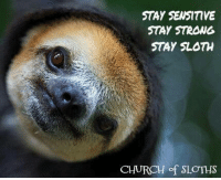 Sloth: STAY SENSTIVE  STAY STRONG  STAY SLOTH  CHURCH  of SLOTHS