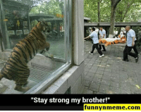 "Funny, Gif, and Lol: ""Stay strong my brother!""  funnynmeme.com Funny Memes - #funnymemes #funnypictures #funnymeme #humor #funnytexts #funnyquotes #funnyanimals #funny #lol #haha #memes #entertainment #gifs #gif #funnygif #funnygifs"