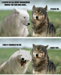 Funny, Moon, and Sun: STAYED UP ALL NIGHT WONDERING  WHERE THE SUN HAD GONE..  PLEASE NO.  WOLFMEMES  THEN IT DAWNED ON ME.  I HATE YOU. Howling at the moon...