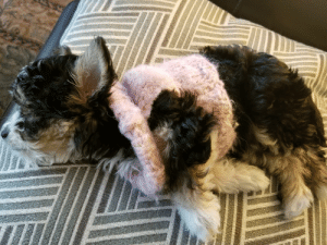 Stella loves to sleep! (Especially with her handmade doggy sweater): Stella loves to sleep! (Especially with her handmade doggy sweater)