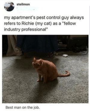 "Richie is good at what he does.: stellmon  my apartment's pest control guy always  refers to Richie (my cat) as a ""fellow  industry professional""  Best man on the job. Richie is good at what he does."