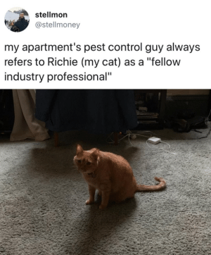 "justcatposts:Best man on the job: stellmon  @stellmoney  my apartment's pest control guy always  refers to Richie (my cat) as a ""fellow  industry professional"" justcatposts:Best man on the job"