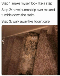 😂😂😂: Step 1: make myself look like a step  Step 2: have human trip over me and  tumble down the stairs  Step 3: walk away like l don't care 😂😂😂