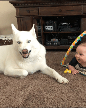 Cute, Dogs, and Funny: Step 1: try to take cute pic of dog and baby. Step 2: dog sneezes during pic. Step 3: accidentally capture my dogs inner demon, and my son thinks its funny.
