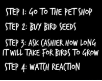 Birds, How, and Ask: STEP I: 4o To THE PETSHoP  STEP 2: BUY BIRD SEEDS  STEP 3: ASK (ASHIER HoW LoNG  ITWILL TAKE FOR BIRDS To 4Row  STEP 4: WATH REACTIoN