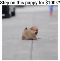 Beautiful, Cute, and Fashion: Step on this puppy for $100k? Would you? Tag a friend and ask them 😳👇🏼 . . Follow For More 😂⤵️ @nuclearchicks . . love selfie tagsforlikes instagood me smile follow cute photooftheday tbt followme girl beautiful happy picoftheday instadaily food swag amazing TFLers fashion igers fun summer instalike bestoftheday smile like4like