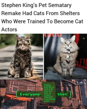 "Cats, Club, and Fucking: Stephen King's Pet Sematary  Remake Had Cats From Shelters  Who Were Trained To Become Cat  Actors  Fucking  loved this so  much to the  moon and  back, no  that  Everyone  it wasn't  ""liked that  it was fucking  Loved laughoutloud-club:  Everyone needs a job"