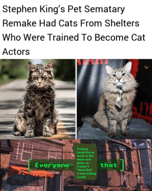 "Cats, Fucking, and Stephen: Stephen King's Pet Sematary  Remake Had Cats From Shelters  Who Were Trained To Become Cat  Actors  PET M  Fucking  loved this so  much to the  moon and  back,no  Everyone  that  it wasn't  ""liked that""  it was fucking  Loved Everyone needs a job via /r/wholesomememes https://ift.tt/2MnKMVy"