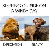 windy day: STEPPING OUTSIDE ON  A WINDY DAY  REALITY  EXPECTATION