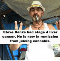 Juice, Memes, and Cannabis: Steve Danks had stage 4 liver  cancer. He is now in remission  from juicing cannabis.