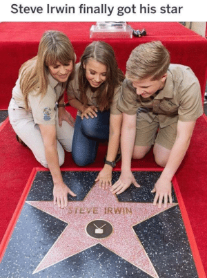 Memes, Steve Irwin, and Tumblr: Steve Irwin finally got his star positive-memes:  3 wholesome star