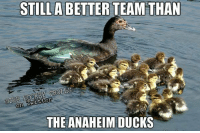 Anaheim Ducks, Ducks, and Rock: STILL ABETTER TEAM THAN  ROCK RY TROLLS  On  THE ANAHEIM DUCKS