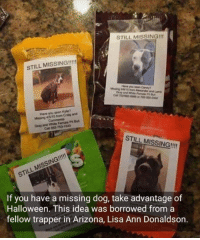 Halloween, Lisa Ann, and Memes: STILL MISSING!!  STILL MISSING!!!!  Have you seen Candyn  Have you seen Kylie?  Missing 4 5/15 from Craig and  Gray and wte  Call 562-753-1543  STILL MISSING!!  STILL MISSING!!!  If you have a missing dog, take advantage of  Halloween. This idea was borrowed from a  fellow trapper in Arizona, Lisa Ann Donaldson. A great idea if you're missing a pet!!!