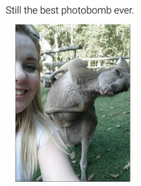 Memes, Photobomb, and Best: Still the best photobomb ever.
