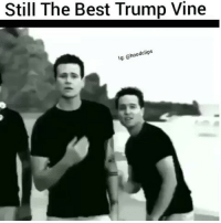 Jay, Memes, and Wildin: Still The Best Trump Vine  lg: @hoodclips @Regrann from @hollywoodunlocked - PressPlay y'all are wildin for bringing Blink182 into this 😩 via @hoodclips@Dagenius_Jay33 Dagenius_Jay33 ( •_•) ∫\ \____( •_•) _∫∫ _∫∫ɯ \ \ dageniuscomedy jay funny reblog retweet follow follow followme followers follower nyc newyork queensnyc nycqueens nycbrooklyn followhim lmao comment comments commentbelow popular instagood iphonesia nyc instamood picoftheday bestoftheday