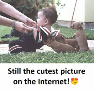 Internet, Memes, and 🤖: Still the cutest picture  on the Internet!