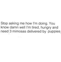 Hungry, Puppies, and Puppy: Stop asking me how I'm doing. You  know damn well l'm tired, hungry and  need 3 mimosas delivered by puppies I mean obviously right?