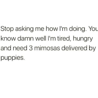 Stop asking me how I'm doing. You  know damn well I'm tired, hungry  and need 3 mimosas delivered by  puppies. If you ask me how I'm doing ONE more time without handing me a mimosa or puppy first I might lose it 😭