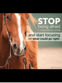 "Horse, Quote, and What: STOP  being afraid  of what could go wrong  and start focusing  on what could go right.  7  SMARTPAK Horse with inspirational quote: ""Stop being afraid of what could go wrong and start focusing on what could go right."""