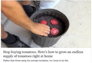 "Definitely, Life, and Tumblr: Stop buying tomatoes. Here's how to grow an endless  supply of tomatoes right at home  Rather than throw away his overripe tomatoes, he chose to do this motorizedmycologist:  denzelle:  denzelle: for some reason i definitely thought this was going to be one of those fuckin… infinite chocolate things. or like, some really weird trick involved. literally it's just ""put the tomatoes in some dirt and they grow into MORE TOMATOES 😱"" which like… yea… that IS how plants work but i don't know if it's a life hack THIS #LIFEHACK IS TOO POWERFUL YOU WILL LITERALLY GET AN ENDLESS SUPPLY  grocery stores hate him! local man discovers gardening"