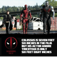 """""""ONLY 6'8"""" heh -👇👇👇👇 Follow @deadpoolfacts for your daily Deadpool dose. -👏👏👏👏 @vancityreynolds 🙌 wadewilson mercwithamouth marvelnation deadpoolfacts deadpoolnation deadpool marvel deadpool2 antihero lolz lmaobruh hahaha lmfao heh hehe MarvelousJokes: STOP  DEADPOOL  COLOSSUS IS SEVEN FEET  SIXINCHIESIN THE FILM  BUT HIS ACTOR ANDRE  TRICOTEUX IS ONLY  SIX FEET EIGHT INCHES """"ONLY 6'8"""" heh -👇👇👇👇 Follow @deadpoolfacts for your daily Deadpool dose. -👏👏👏👏 @vancityreynolds 🙌 wadewilson mercwithamouth marvelnation deadpoolfacts deadpoolnation deadpool marvel deadpool2 antihero lolz lmaobruh hahaha lmfao heh hehe MarvelousJokes"""