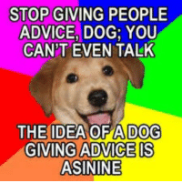 Advice, Advice Dog, and Idea: STOP GIVING PEOPLE  ADVICE, DOG; YOU  CAN'T EVEN TALK  THE IDEA OF A DOG  GIVING ADVICE!S  ASININE
