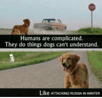 "Dogs, Meme, and Winter: STOP  Humans are complicated.  They do things dogs can't understand.  THE BEST MONIE  Like ATTACKING RUSSIA IN WINTER <p>A meme format if i've ever seen one via /r/MemeEconomy <a href=""https://ift.tt/2LaDlxD"">https://ift.tt/2LaDlxD</a></p>"