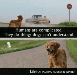 Movie quotes cam be quite sad : STOP  Humans are complicated.  They do things dogs can't understand.  THE SEST MOVJE INES  LiKe ATTACKING RUSSIA IN WINTER Movie quotes cam be quite sad