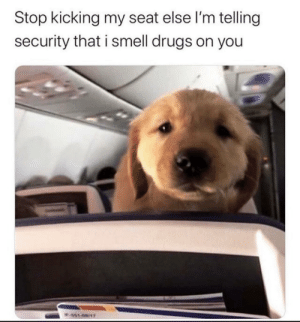srsfunny:  Drug dog: Stop kicking my seat else l'm telling  security that i smell drugs on you  W451-68/1T srsfunny:  Drug dog