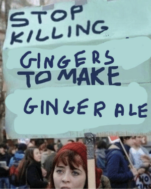 Ale, Stop, and Gingers: STOP  KILLING  GINGERS  GINLER ALE gingernt