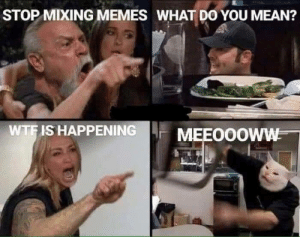 awesomesthesia:  Meeeoww: STOP MIXING MEMES WHAT DO YOU MEAN?  WTF IS HAPPENING  MEEOOOWW awesomesthesia:  Meeeoww