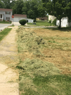 Trashy, For, and Stop: STOP Skip mowing the lawn for a month!