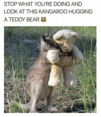 They will steal your heart...: STOP WHAT YOU'RE DOING AND  LOOK AT THIS KANGAROO HUGGING  A TEDDY BEAR They will steal your heart...