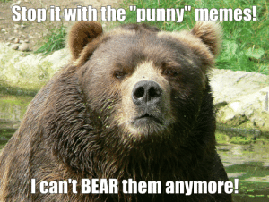 """19 Hilarious Grizzly Bear Meme Images and Pictures 