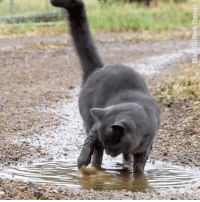 Cats, Dank, and Water: Stor ful Mark Thomas But I thought cats hated water! 😁🐱