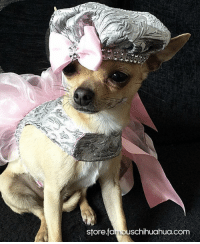 Meet Lilly, a stunning chihuahua fashion model from the UK! Today she became a Famous Chihuahua! Let's all congratulate her and check out her fabulous pet celebrity feature at http://www.famouschihuahua.com/featured-chihuahuas/lilly-butler/ #lilly #petcelebrity #famouschihuahua #famousdog #chihuahua #dogmodel: store famouschihuahua.com Meet Lilly, a stunning chihuahua fashion model from the UK! Today she became a Famous Chihuahua! Let's all congratulate her and check out her fabulous pet celebrity feature at http://www.famouschihuahua.com/featured-chihuahuas/lilly-butler/ #lilly #petcelebrity #famouschihuahua #famousdog #chihuahua #dogmodel