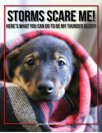 Storm season is upon us so we thought we'd share some of our top tips to help your furry friends stay calm and safe during them: https://www.calgaryhumane.ca/storms/: STORMS SCARE ME!  HERE'S WHAT YOU CAN D0 TO BE MY THUNDER BUDDY!  mane Storm season is upon us so we thought we'd share some of our top tips to help your furry friends stay calm and safe during them: https://www.calgaryhumane.ca/storms/