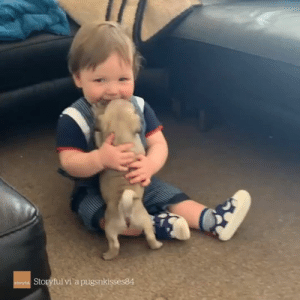 Today, Video, and Adorable: Storyful vi a pugsnkisses84 The most adorable video you'll see today 😍